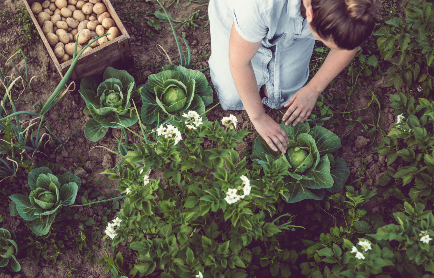 Young Woman Working in a Home Grown Vegetable Garden